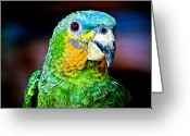 Amazon Parrot Greeting Cards - Quinny Greeting Card by Laura M. Vear