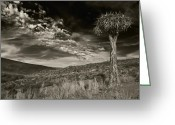 Quiver Greeting Cards - Quiver Tree Greeting Card by Basie Van Zyl