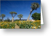 Quiver Greeting Cards - Quiver Trees Greeting Card by Tony Camacho