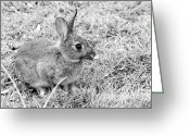 Adorable Bunny Greeting Cards - Rabbit Greeting Card by Louise Heusinkveld