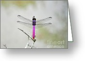 Mosquito Greeting Cards - Radiant Roseate Greeting Card by Al Powell Photography USA