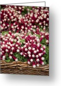 Sell Greeting Cards - Radishes in a basket Greeting Card by Jane Rix