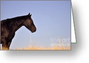 Quarter Horse Greeting Cards - Rafter Cross Greeting Card by Juls Adams