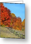 Reds Of Autumn Greeting Cards - Rail Fence in Fall Greeting Card by Peg Runyan