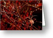 Red Maple Greeting Cards - Rain Dance Greeting Card by Rona Black
