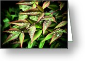 Colorful Photography Greeting Cards - Rain Kissed Greeting Card by Karen M Scovill