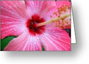 Digital-photography Photo Greeting Cards - Rain Petals Greeting Card by Amanda Vouglas
