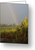 Pacific Islands Greeting Cards - Rainbow Arching Into Field Behind Stream Greeting Card by Stockbyte