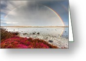 Evgeni Dinev Greeting Cards - Rainbow by the Lake Greeting Card by Evgeni Dinev