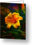 Yellow Flower Digital Art Greeting Cards - Rainbow Daylily Heat Greeting Card by Bill Tiepelman