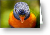 Exotic Bird Greeting Cards - Rainbow lorikeet Greeting Card by Sheila Smart