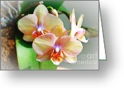 Exotic Flora Greeting Cards - Rainbow Orchids Greeting Card by Andee Photography
