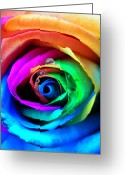  Color  Colorful Greeting Cards - Rainbow Rose Greeting Card by Juergen Weiss