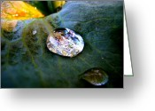 Dark Moss Green Photo Greeting Cards - Raindrop on Leaf Greeting Card by Shirley Sirois