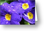 Flower Greeting Card Greeting Cards - Raindrops on Blue Flowers Greeting Card by Carol Groenen