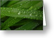 Raining Greeting Cards - Raindrops on Green Leaves Greeting Card by Carol Groenen