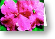 Impatiens Flowers Greeting Cards - Raindrops on Impatiens Greeting Card by Thomas R Fletcher
