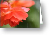 Bouquets Greeting Cards - Raindrops on Roses Greeting Card by Julie Lueders