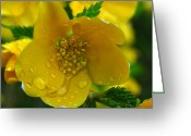 Spring-blooming Greeting Cards - Raindrops on Yellow Greeting Card by Juergen Roth