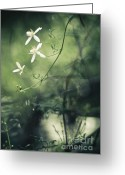 David Lade Greeting Cards - Rainforest dreaming Greeting Card by David Lade