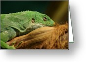 Wild Lizard Greeting Cards - Rainforest Lizard Greeting Card by Brian T. Nelson