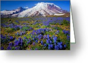 Lupines Greeting Cards - Rainier Lupines Greeting Card by Inge Johnsson