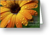 Appalachian Mountains Greeting Cards - Rainy Day Daisy Greeting Card by Thomas R Fletcher