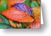 Purple Greeting Cards - Rainy Day Leaves Greeting Card by Rona Black