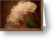 Warm Greeting Cards - Rainy Day Orchid Greeting Card by Tom Mc Nemar