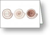 Sea Shell Art Greeting Cards - Ramshorn Shells Greeting Card by Amanda Makepeace