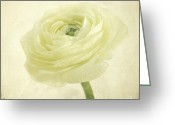Flower Blossom Greeting Cards - Ranunculus Blossom Greeting Card by Iris Lehnhardt