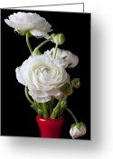 Ranunculus Greeting Cards - Ranunculus In Red Vase Greeting Card by Garry Gay