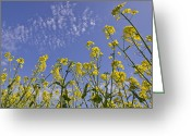 Yellow Line Digital Art Greeting Cards - Rapeseed Greeting Card by Melanie Viola