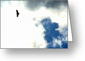 Light And Dark  Greeting Cards - Raptor in the Sky Greeting Card by Lisa Rose Musselwhite