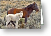 Quarter Horses Greeting Cards - Rare Wild Albino Foal Greeting Card by SB Sullivan