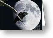 Edgar Greeting Cards - Raven Barking at the Moon Greeting Card by Wingsdomain Art and Photography