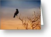 Crow Greeting Cards - Raven On Sunlit Tree Branches, Grand Canyon Greeting Card by Trina Dopp Photography