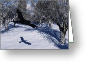 Jackrabbit Greeting Cards - Raven Tracking Greeting Card by Ian Anderson