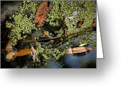 Brown Leaves Greeting Cards - Raw Beauty Greeting Card by Bonnie Bruno