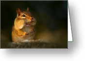 Chipmunk Greeting Cards - Ray Greeting Card by Lori Deiter