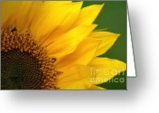 Garden Decoration Mixed Media Greeting Cards - Ray of Sunflower Greeting Card by Sharon  Talson