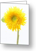 Cheery Greeting Cards - Ray of Sunshine Greeting Card by Anne Gilbert
