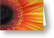 Pollinate Greeting Cards - Ray of Sunshine Greeting Card by Robert Harmon