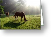 Caballo Greeting Cards - Rays From Heaven Greeting Card by Jenny Gandert