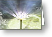 Lotus Leaves Greeting Cards - Rays of Hope Greeting Card by Douglas Barnard