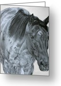 Quarter Horse Greeting Cards - Razzy Greeting Card by Lucka SR