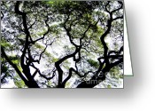 Old Tree Greeting Cards - Reach for the Sky Greeting Card by Karen Wiles