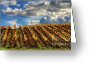 Fall Photographs Greeting Cards - Reach The Sky Greeting Card by Mars Lasar