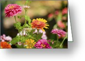 Florida Flowers Greeting Cards - Reaching for the Sun Greeting Card by Rich Franco
