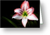 Flower Greeting Card Greeting Cards - Reaching For You Greeting Card by Steven Richardson